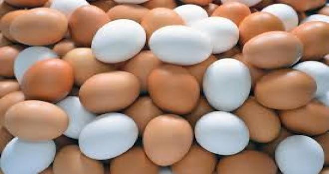AB Üyesi 24 Ülkede Zehirli Yumurtaya Rastlandı