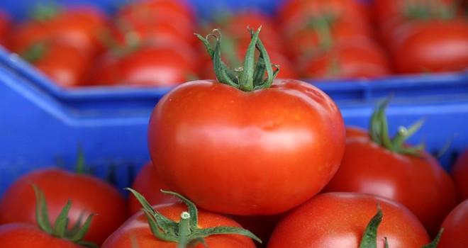 Antalya'dan 46 ülkeye domates ihracatı yapılıyor