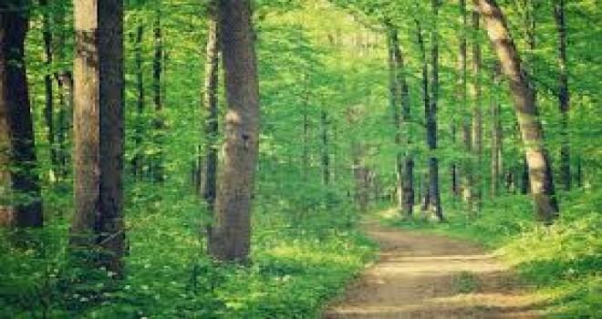 Baba (70) ve oğul (26) kaçırdıkları hırsızı ağaca bağlayıp ormana terk ettiler