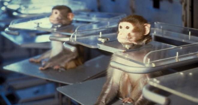Dizelgate 2.0: Volkswagen, maymunlara dizel egzoz dumanı teneffüs ettirdi