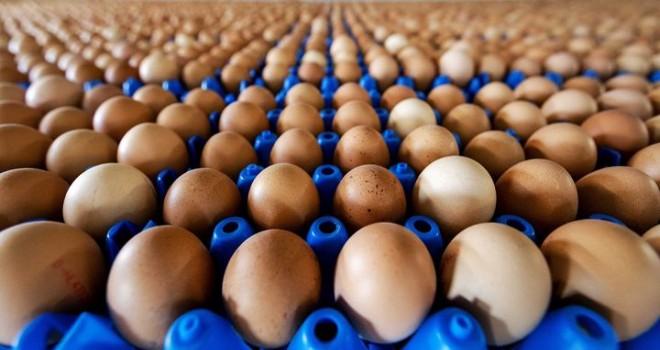 Avrupa'daki Böcek İlaçlı Yumurta Skandalı