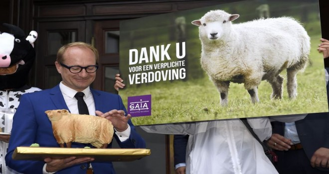 Belçika Anayasa Mahkemesi, şoksuz kesim yasağına karşı 51 şikayet aldı